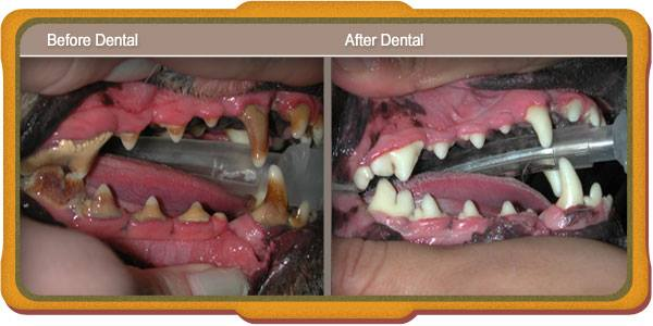 before-after-veterinary-dental