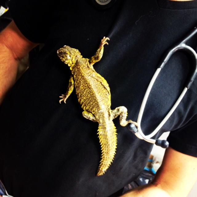 molnar-reptile