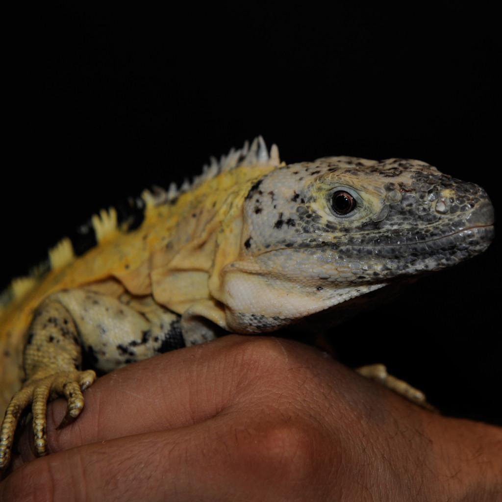 reptile-service-new