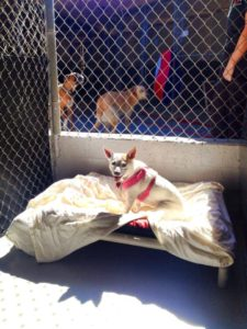 Dog Boarding in Calabasas, CA